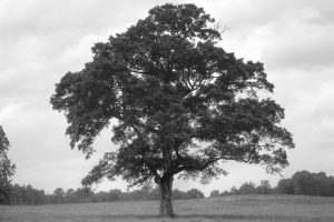 Do You Know Your Lawyer Mentoring Tree?